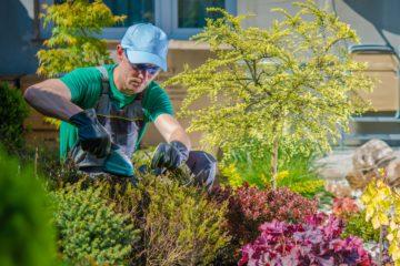 Cuidado de Césped & Jardín